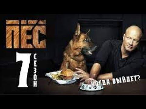 Смотреть Пёс 7 Сезон Сериал 2021 3 Серия Онлайн Криминал